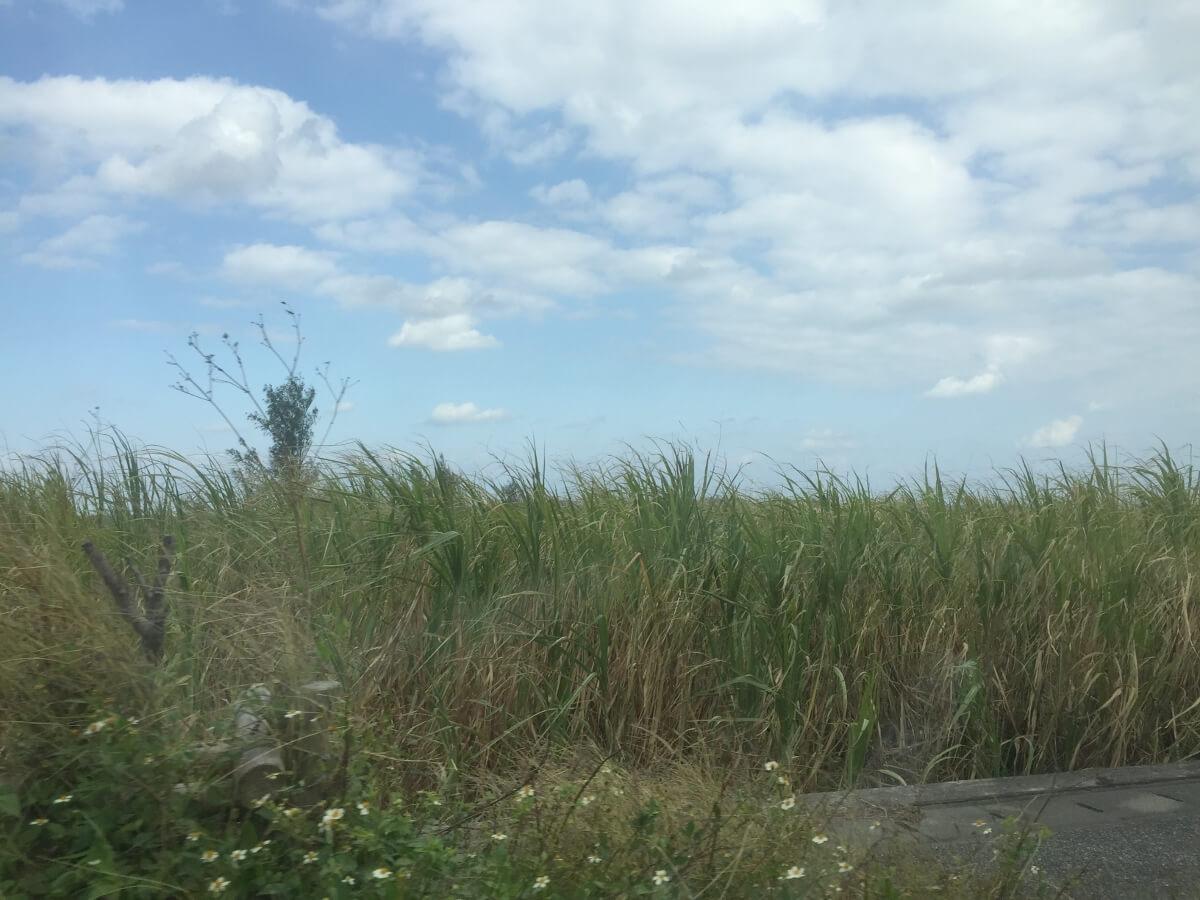 宮古島らしい青空と畑(さとうきび)
