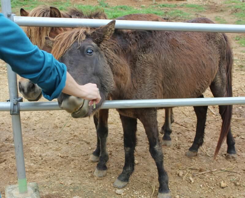 宮古島の日常風景写真-馬