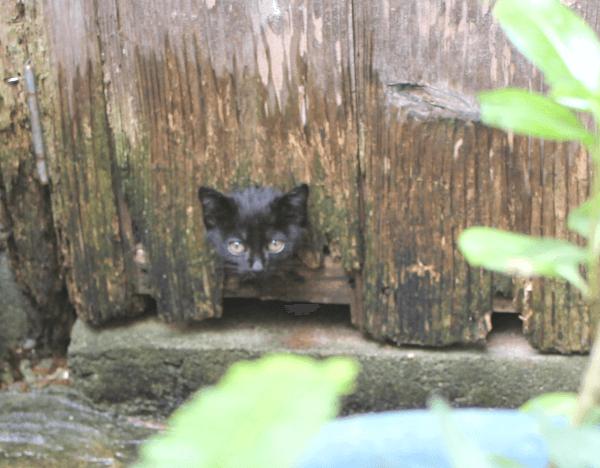 《写真》宮古島の猫〜猫にとってはどこでも通路
