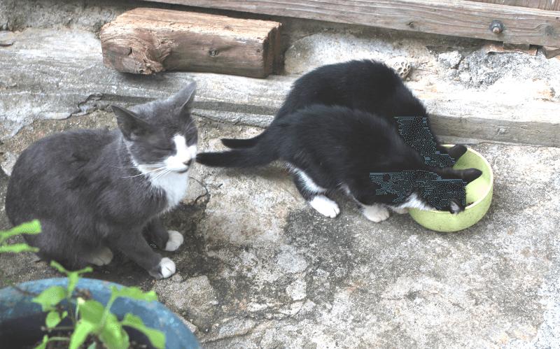 《写真》宮古島の猫〜人がいてもご飯が食べられる猫