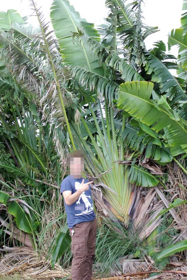 宮古島らしい背の高い木