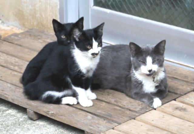 《写真》宮古島の猫〜おりこうにしてご飯を待つ