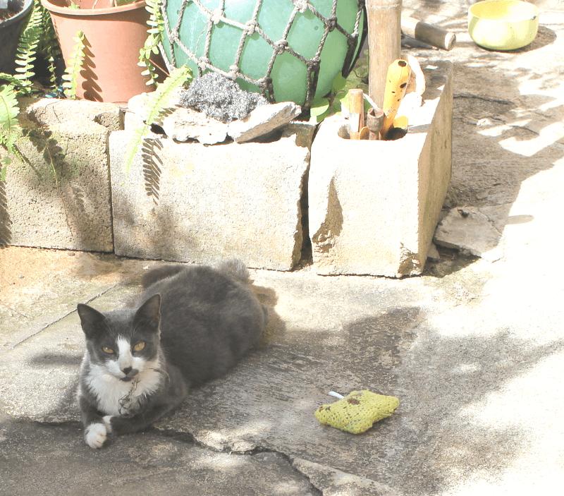 《写真》宮古島の猫〜人なつっこい猫もいる