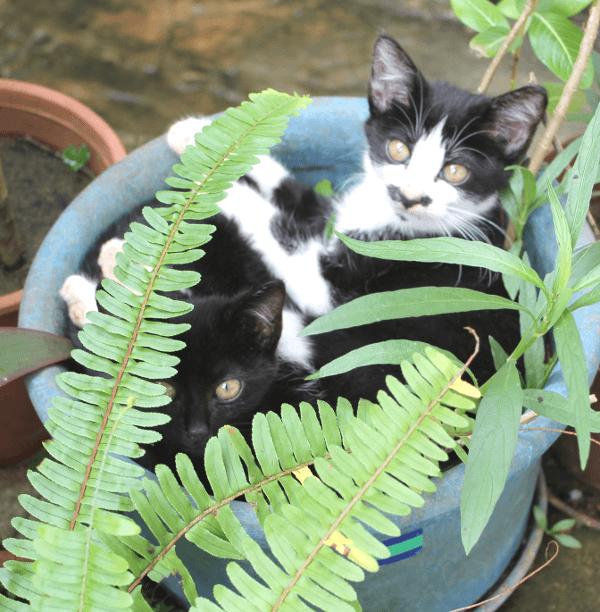 《写真》宮古島の猫〜庭の植木鉢をベッドにする