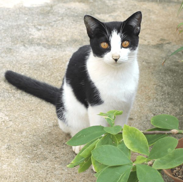 《写真》宮古島の猫〜写真を撮らせてくれてありがとう!