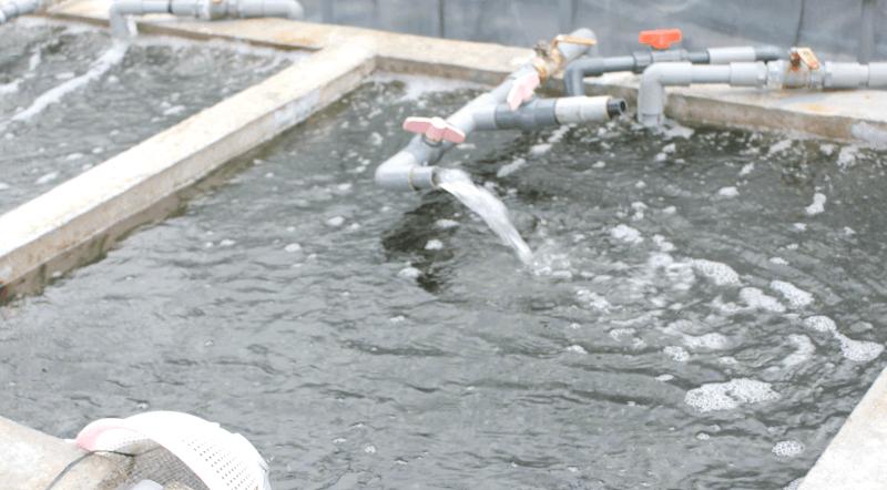 宮古島の海ぶどう-この中で海ぶどうを養殖