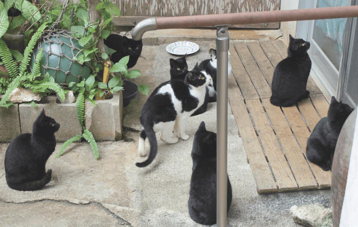 《写真》宮古島の猫〜ご飯をもらいに外猫が集まる