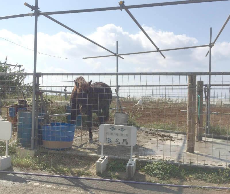 来間島で見かけた馬(1)