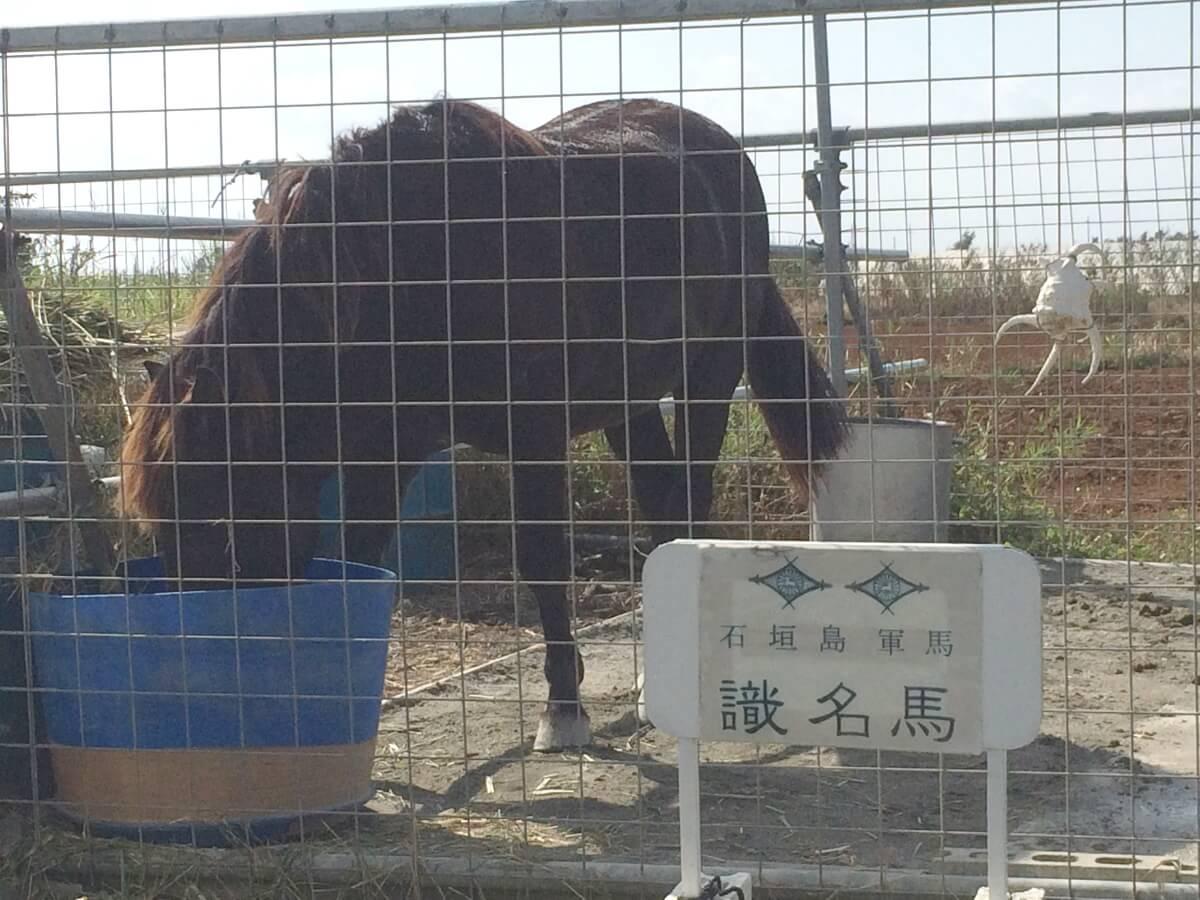 来間島で見かけた馬(2)