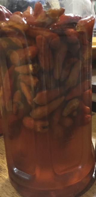 MYコーレーグース
