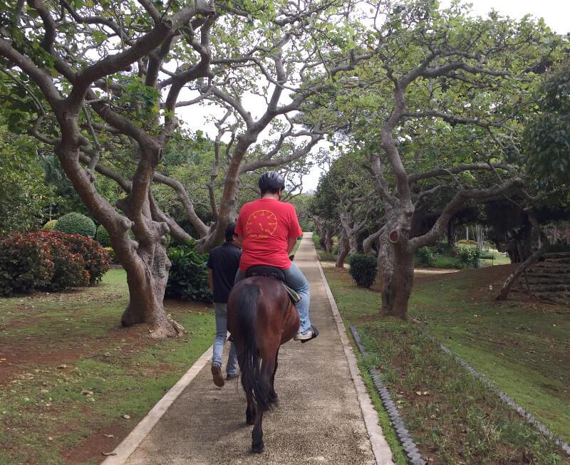 宮古島での引き馬体験の様子を後ろから見たところ