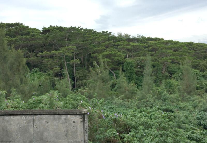 宮古島博物館裏の森