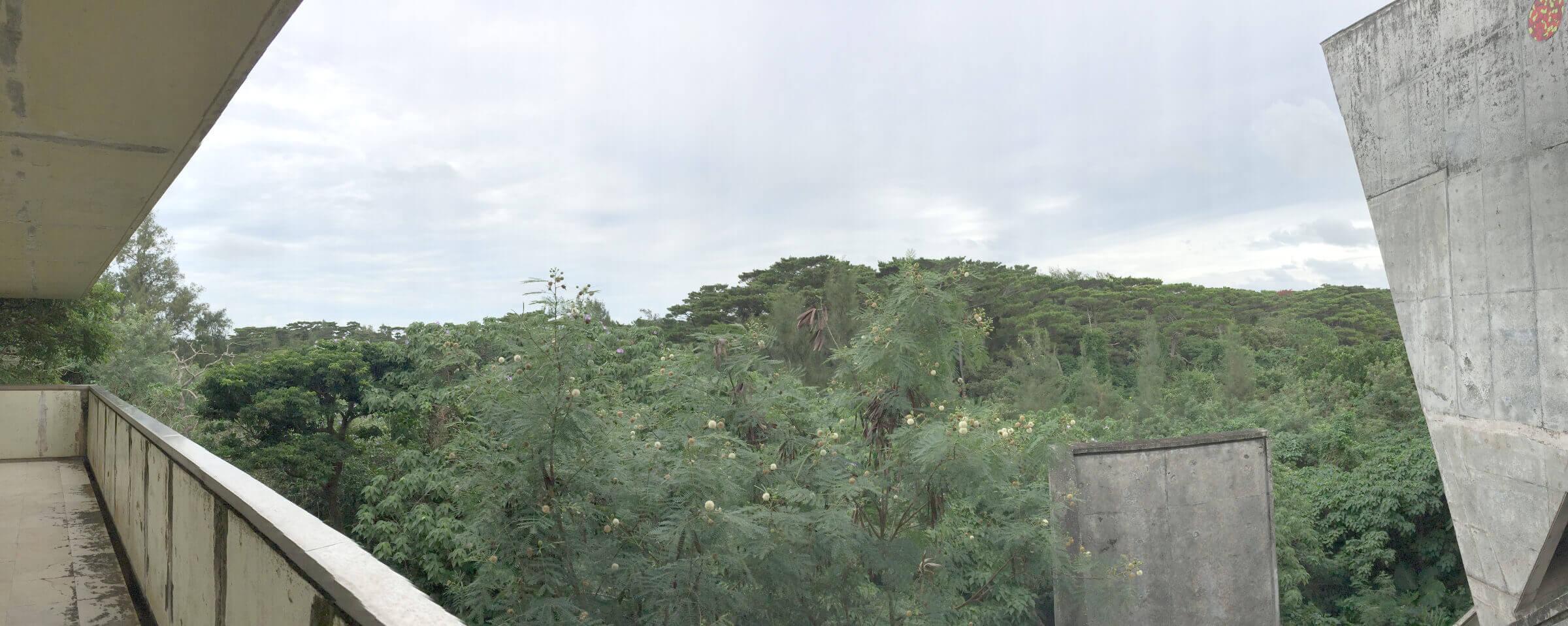 博物館裏の森林風景