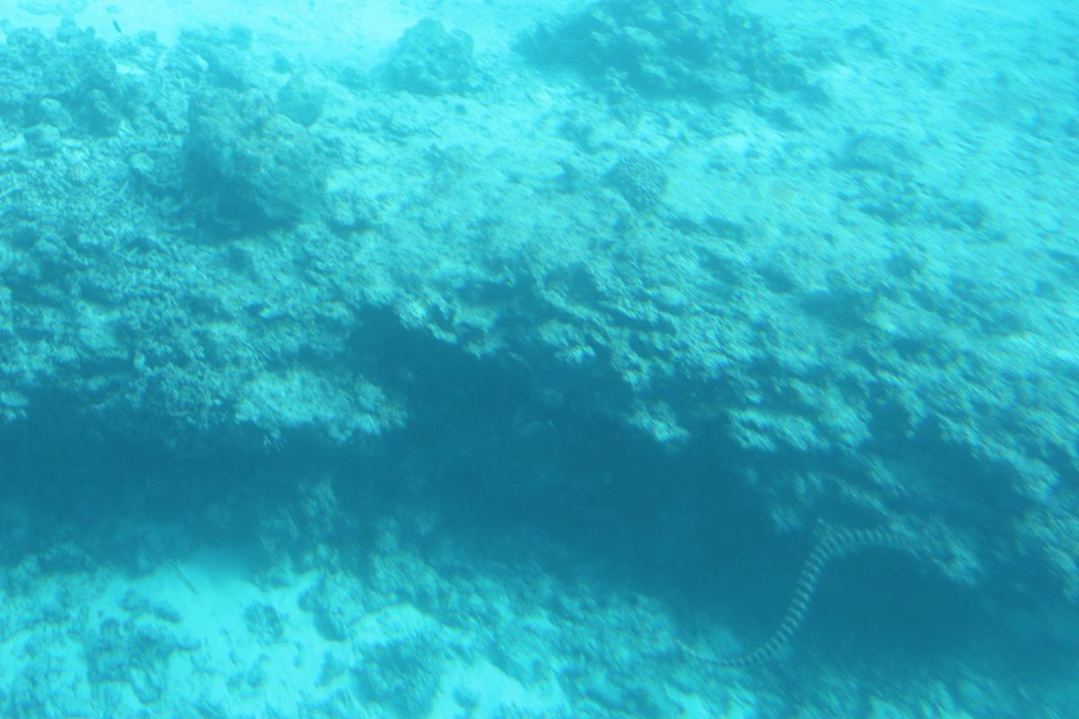ウミヘビ(?)もいました!!〜宮古島で水中観光船シースカイ体験