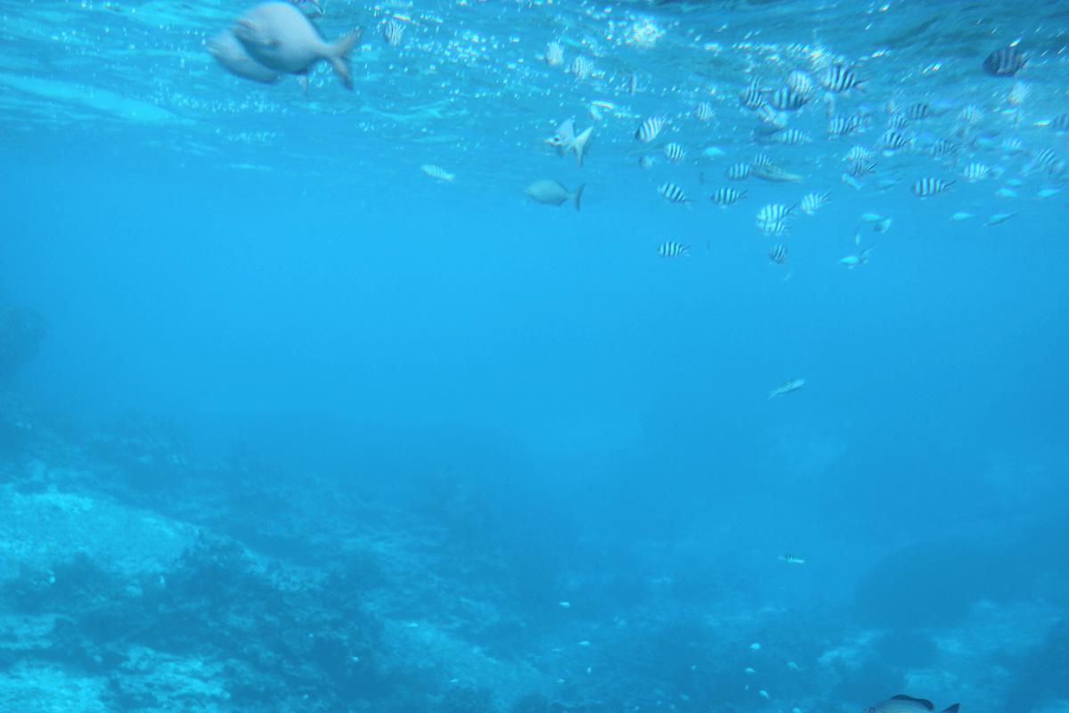 魚が見え始めてきました!!〜宮古島で水中観光船シースカイ体験
