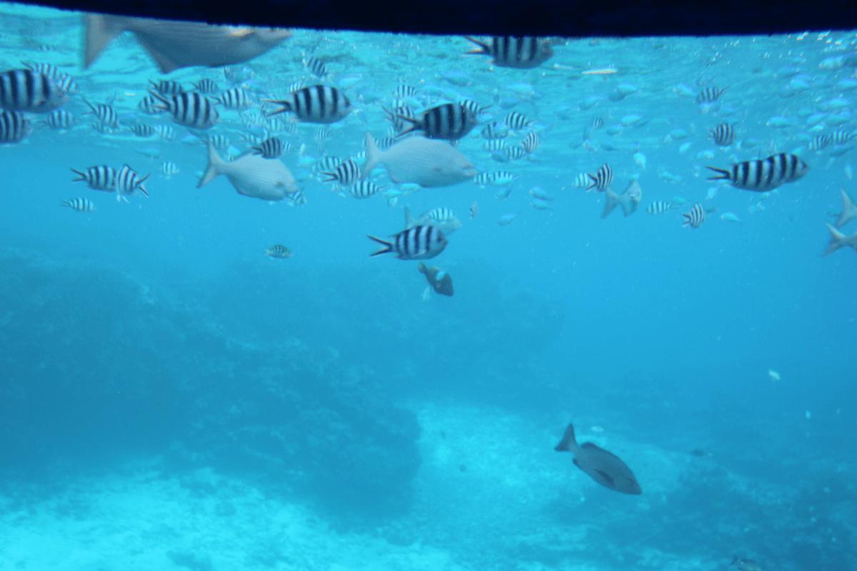 もう、これ魚群です!!〜宮古島で水中観光船シースカイ体験
