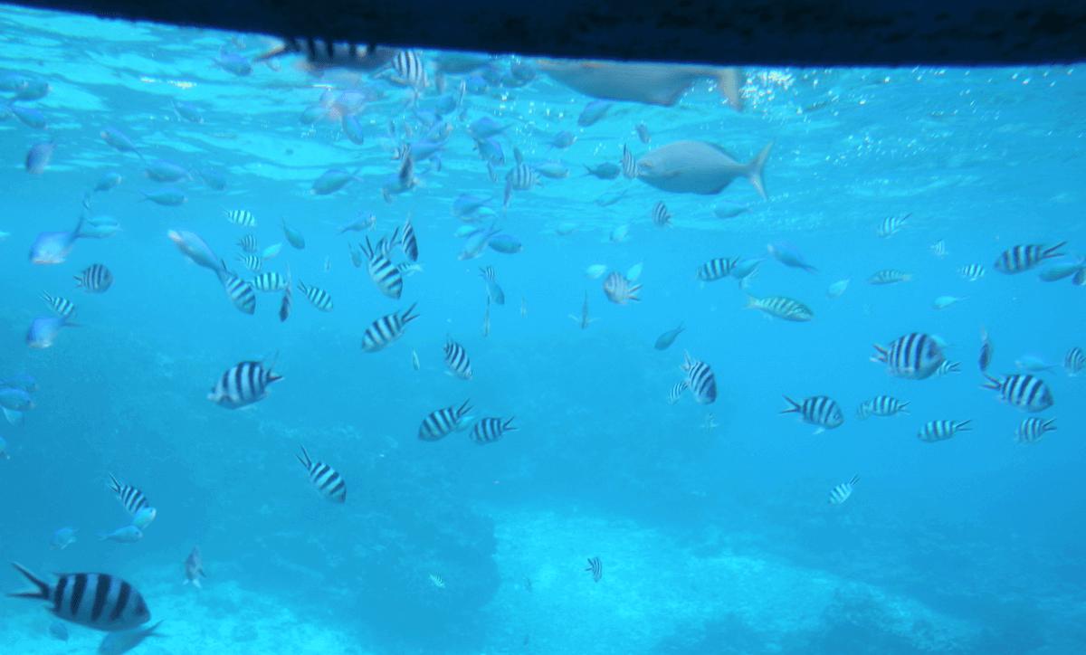 魚群2〜宮古島で水中観光船シースカイ体験