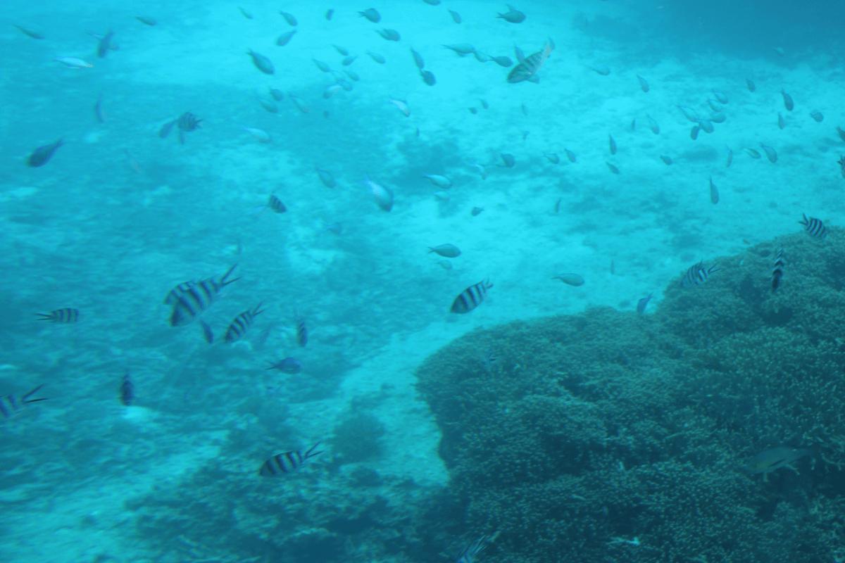 魚群3〜宮古島で水中観光船シースカイ体験