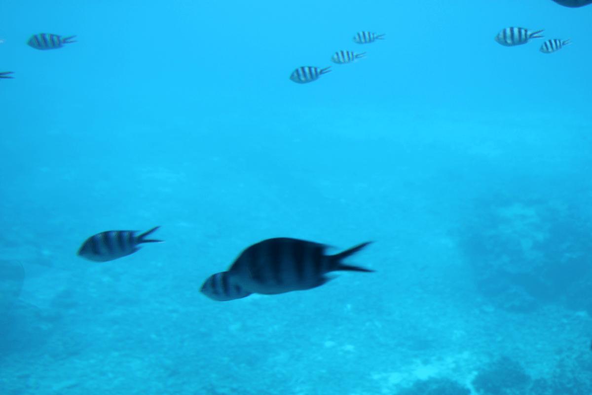 魚群MAXを過ぎる〜宮古島で水中観光船シースカイ体験