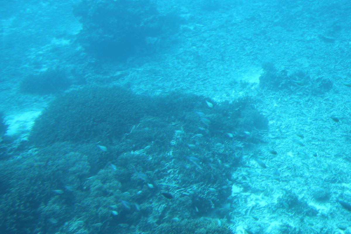 海底に魚の群れがいます〜宮古島で水中観光船シースカイ体験