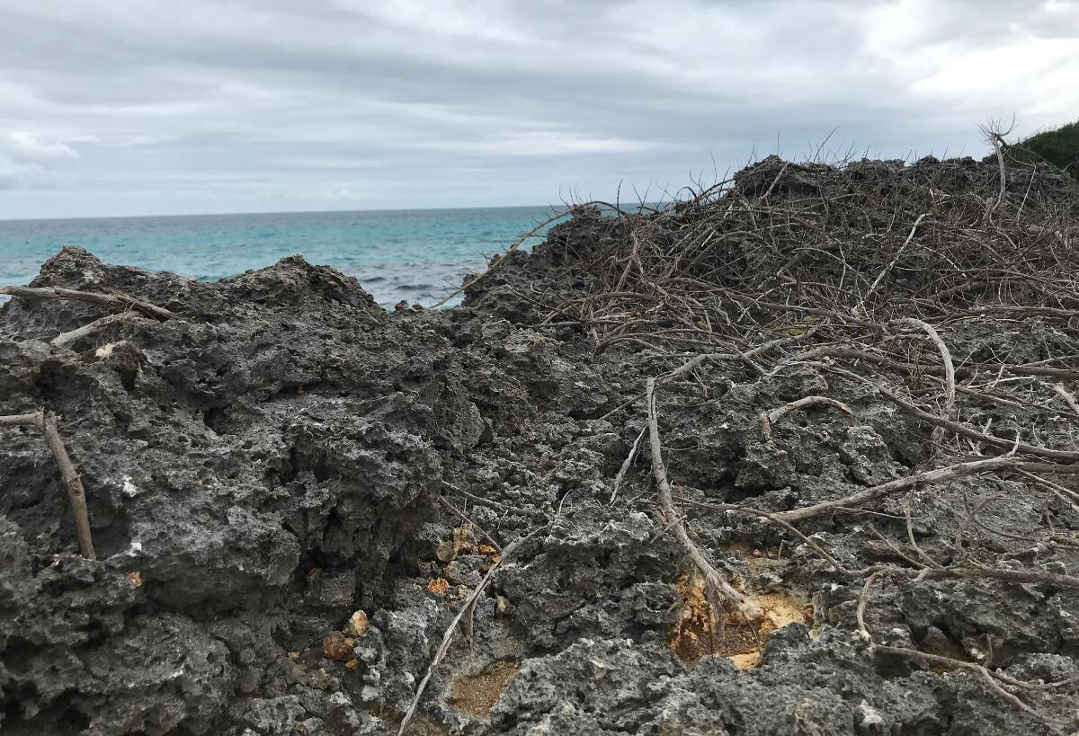 宮古島の観光スポット、池間ブロックの岩場に枯れた草木
