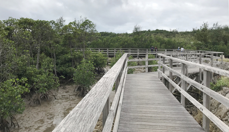 島尻マングローブ遊歩道の風景-1