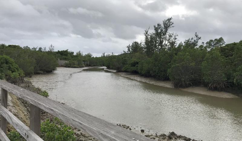 島尻マングローブ遊歩道の風景-2