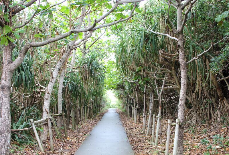 宮古島通り池への道