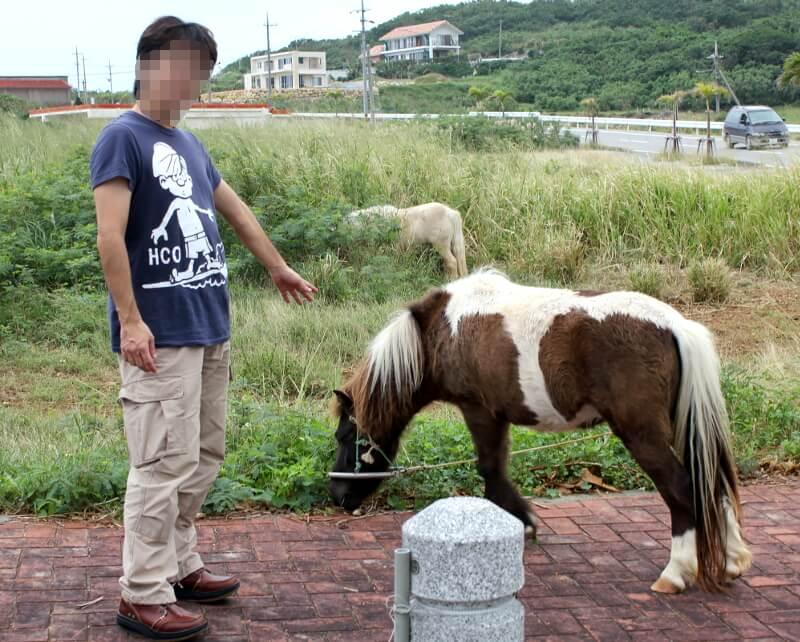 人間を気にせず食事を続ける馬