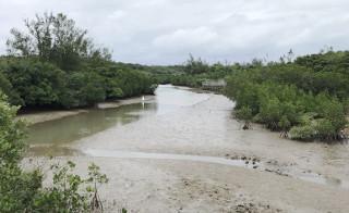 宮古島の自然を満喫できる観光名所なら島尻マングローブ