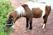 宮古島でドライブ中に見つけた馬の写真